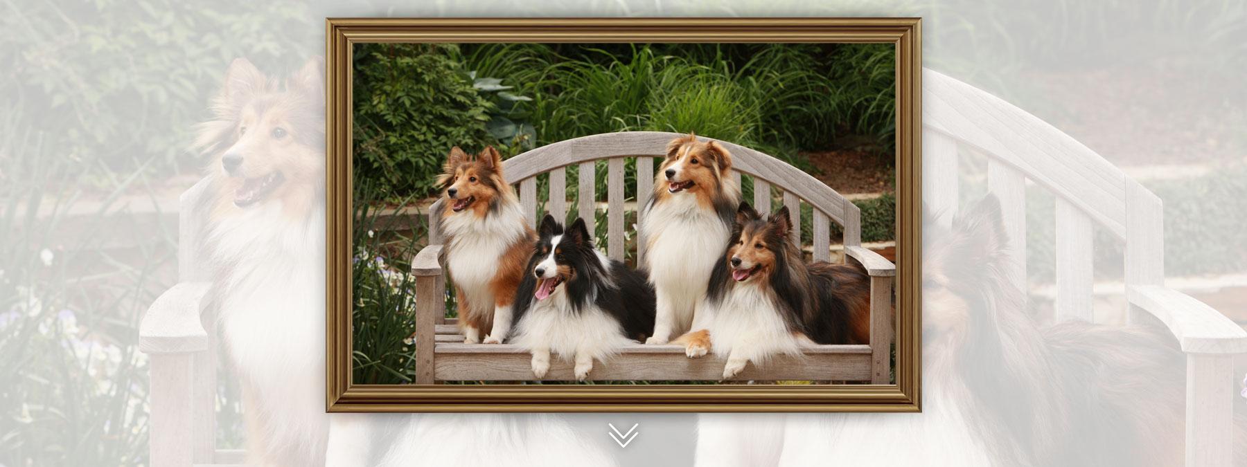 Pets-Framed3